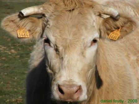 Ah la Vache !!!